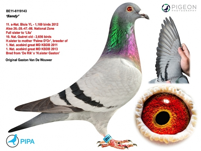 Jens and Sandy are the parents of Provincial Gaston, 1st prov. Ace Pigeon Long Distance 2014