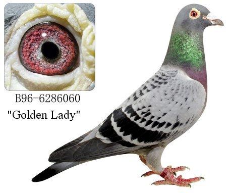 jung101B-1996-6286060_Golden_Lady_RPW