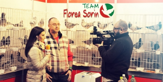 The First Romanian Pigeon Arrived In The Final Million Dollar Pigeon Race South African Samdpr Team Florea Sorin Over the time it has been ranked as high as 278 999 in the world, while most of its traffic comes from qatar, where it reached as high as 869 position. team florea sorin