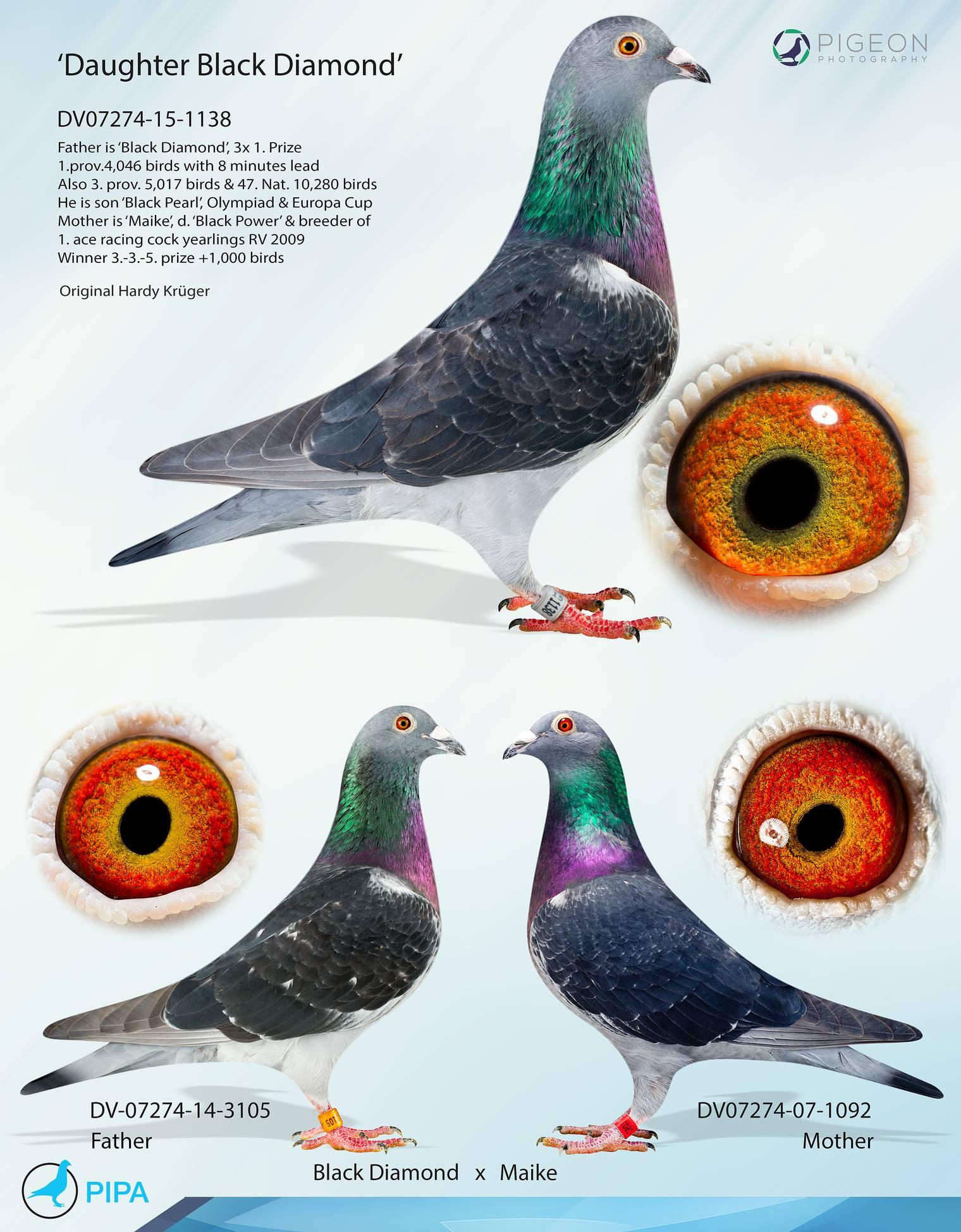 pigeon olympiad 2017