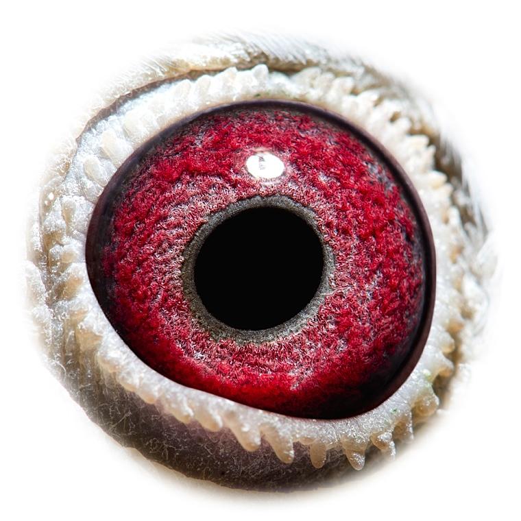 NL14-1605525_eye_1