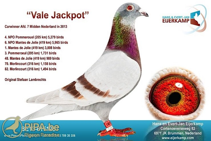 be13-6151281_vale-jackpot_eijerkamp