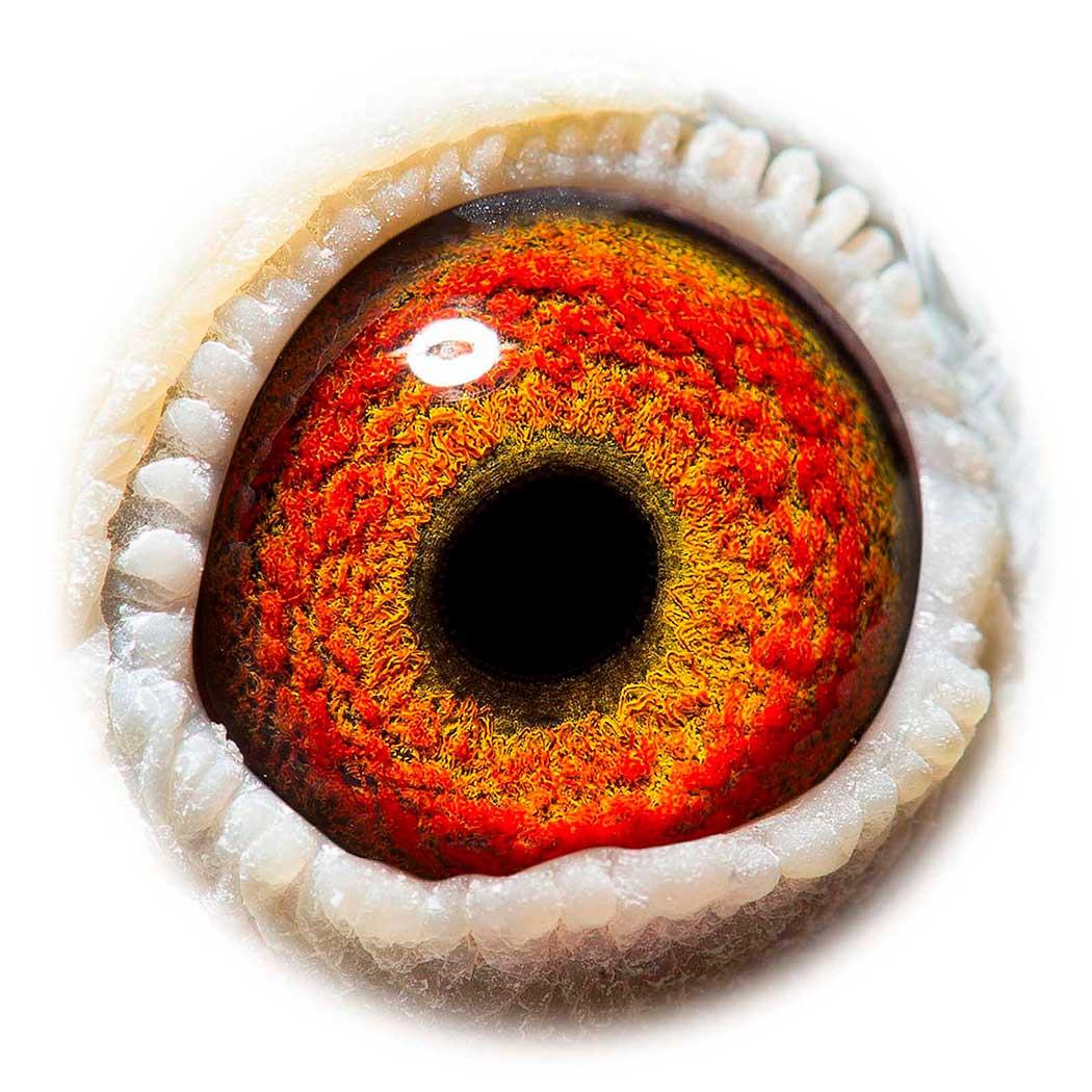 BE13-2172852_eye