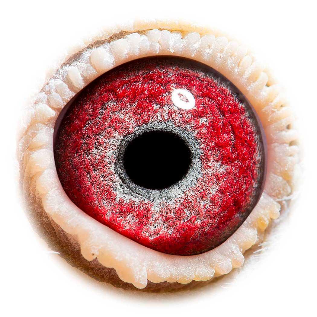 BE14-2022463_eye