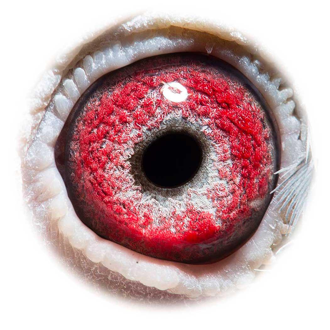 BE14-2022838_eye