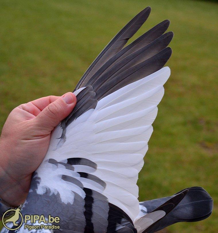 pec_nationale_winnaar_vleugel
